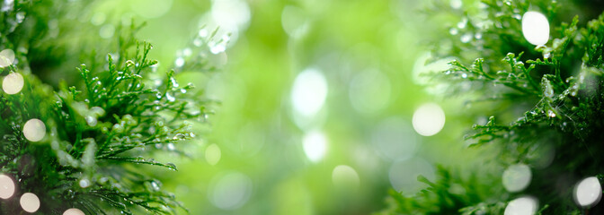 green foliage with water drops . rays of light