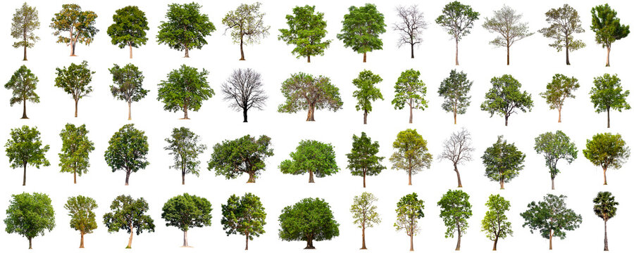 isolated big tree collection isolated on white