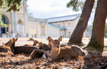 Traveling in the wonderland of the deers