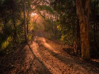 Golden Afternoon Light Shining Through Forest along a Dirt Road Fotobehang