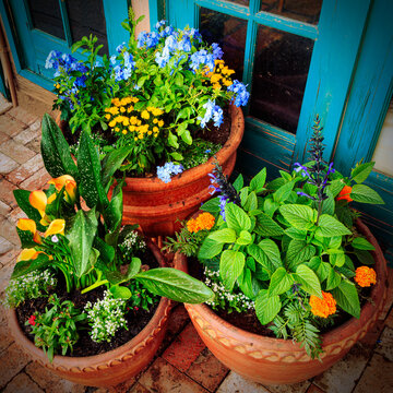 Beautiful Collection of Potted Flower Plants