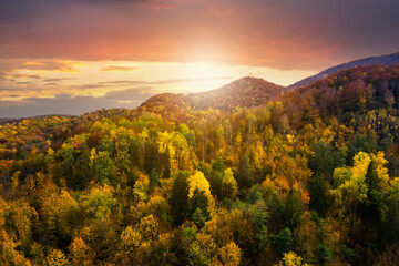 Aerial view of high mountain hills covered with dense yellow forest and green spruce trees in...