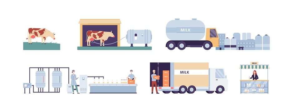 Production and distribution of cows milk flat vector illustration isolated.