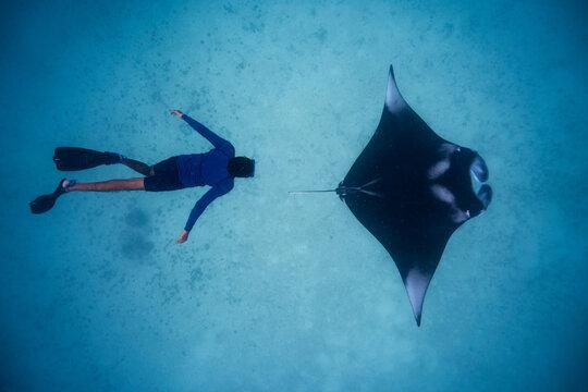 Manta ray with diver snorkeler Hanifaru Maldives