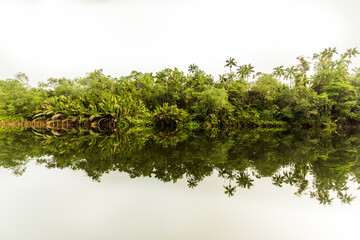 Trees reflecting in a river in Cambodia