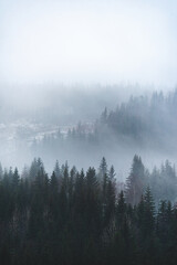 A vertical shot of beautiful green trees in the forest on the foggy background