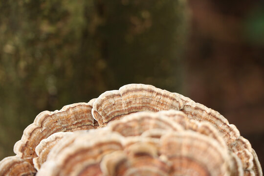 Layers of fungus clinging to the outside of a tree
