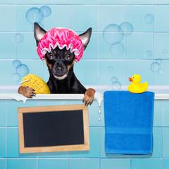 dog in bathtub under shower celaning and washing