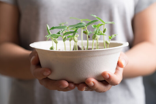Organic plant growing in recycling biodegradable bowl holding by woman hand, eco friendly sustainable concept
