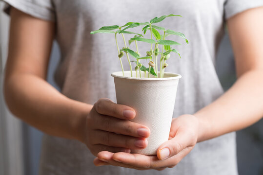 Organic plant growing in recycling biodegradable coffee cup holding by woman hand, eco friendly sustainable concept