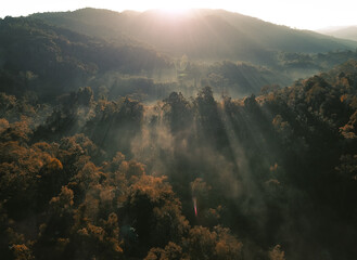 Foggy forest Morning light in the forest from above