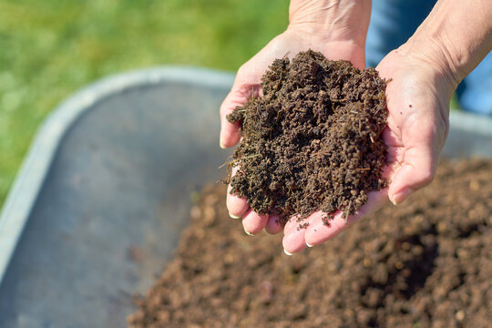 Fresh compost in two hands with a weelbarrow