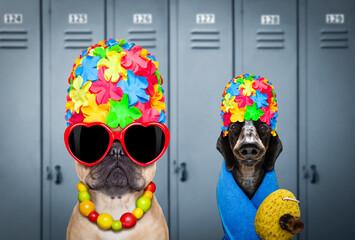 dog swim cap and goggles in locker room