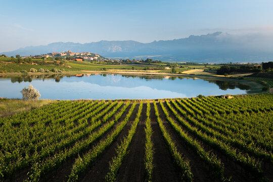 Vineyard and Carralogroño lake with Laguardia town as background, Rioja Alavesa, Spain