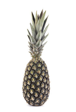 pineapple in studio