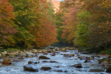 Colorful autumnal landscape of a river in the forest