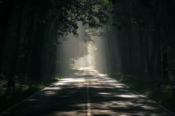 route, forêt, arbre, arbre, chemin, nature, brouillard, automnal, paysage, vert, soleil, bois,...