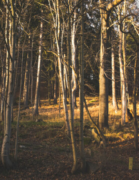 Forest trees in the mountains during fall. 8,5x11 aspect ratio. Magazine cover size.