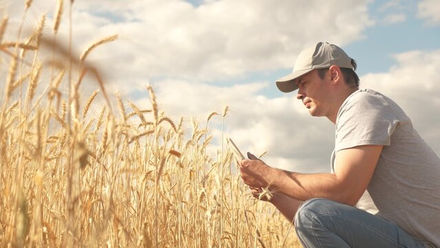 businessman analyzing grain harvest. farmer working with tablet computer on wheat field. agricultural business. agronomist with tablet studying wheat harvest in the field. grain harvest. ecologically