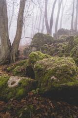 Porośnięte mchem skały w lesie Wolskim w Krakowie