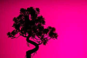 Silhouette Of Tree Bonsai Pink Background Isolated Wallpaper
