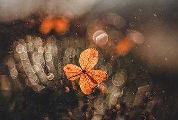 Obraz Jesienna impresja- Hortensja - fototapety do salonu
