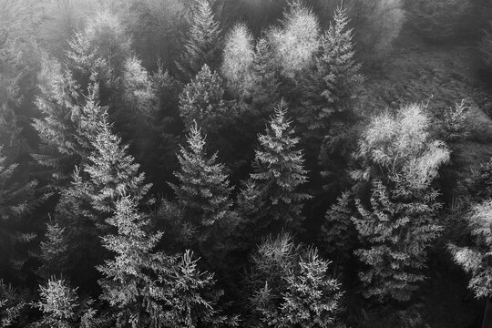 freezed nature in czech forest