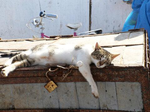 Chat sur le port d'Essaouira