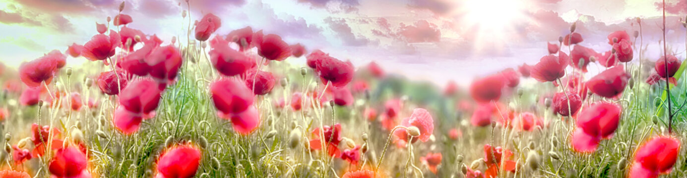 Selective and soft focus on poppy flower, beautiful sunset landscape in meadow, beauty in spring