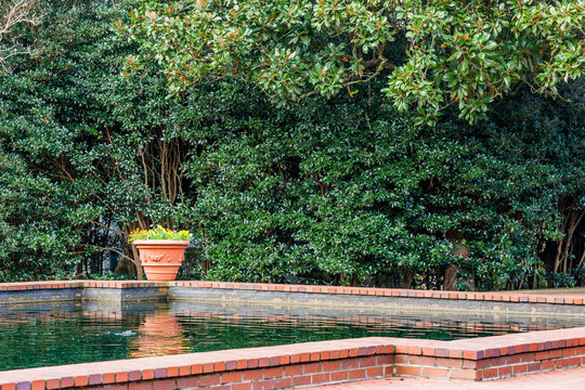 A secluded swimming pool with a pot of pansies and a leafy hedge.