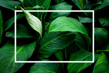 Wall Mural - tropical green leaves with white paper note frame, nature flat lay concept