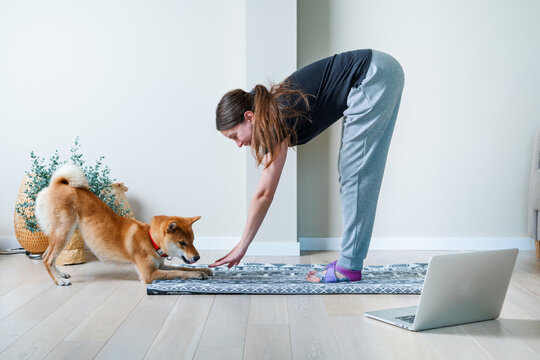 Doga or Doga yoga is the practice of yoga as exercise with dogs. Online yoga at home. Young woman and her dog training together