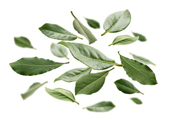 Green Bay leaves levitate on a white background