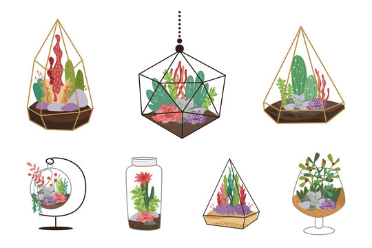 Home decor with florarium. Vector illustration on white. Set of suculents and cactus.