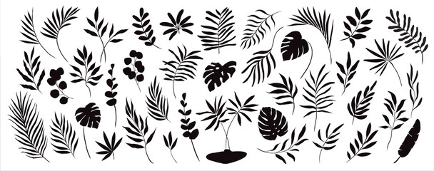 set of hand drawn modern tropical exotic leaves and branches silhouette isolated on white background