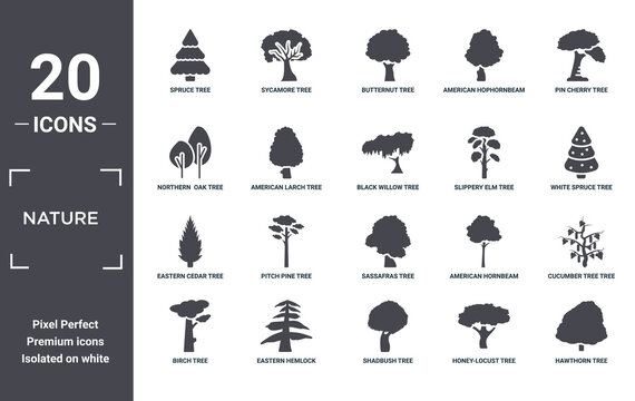 nature icon set. include creative elements as spruce tree, pin cherry tree, slippery elm tree, sassafras eastern hemlock eastern cedar filled icons can be used for web design, presentation, report