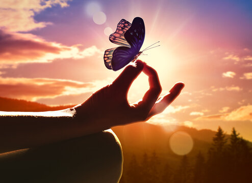 Close up of a hand in a meditation pose and butterfly.