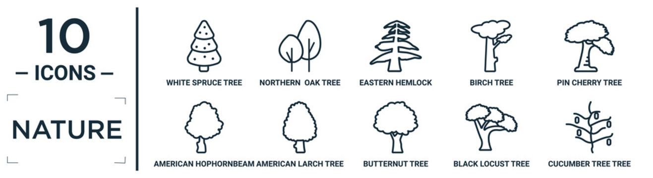 nature linear icon set. includes thin line white spruce tree, eastern hemlock tree, pin cherry tree, american larch black locust cucumber american hophornbeam icons for report, presentation,