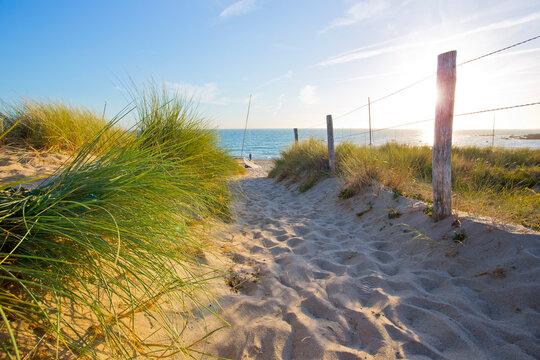 Paysage de bord de mer, chemin de sable menant à la plage à travers les dunes sauvages.