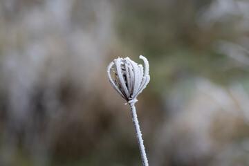 Obraz macro rośliny zimowe - fototapety do salonu