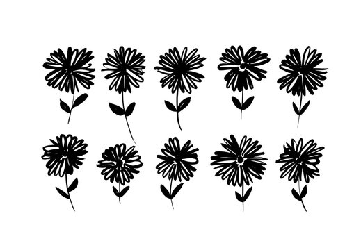 Chamomile hand drawn black paint vector set. Ink drawing flowers and plants, monochrome artistic botanical illustration. Isolated floral elements, daisy, aster, chrysanthemum. Brush strokes silhouette