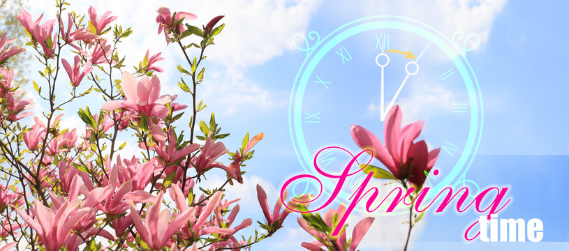 Blossoming magnolia tree with digital clock and text SPRING TIME. Concept of time change