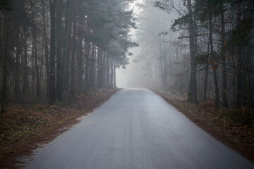 asphalt road in the fog that leads through the forest