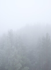 forest Mountain landscape with creeping fog. High peaks in the clouds, cold weather. Tourism in the...