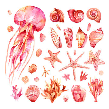 Watercolor marine clipart. Pink, purple and beige theme with starfish, shell and seaweed on white background isolated. Clipart, illustration for postcards, posters, textile design and other Souvenirs.
