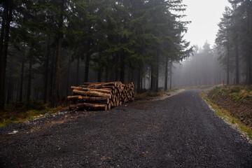 Fototapeta stos belek ze ściętych drzew. Sosny ułożone i gotowe do wywiezienia do tartaku obraz