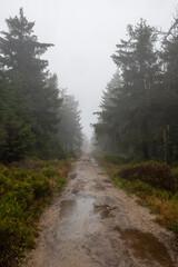 Fototapeta leśną ścieżka po jesiennej burzy. Błoto i liczne kałuże utrudniają spacerowanie obraz