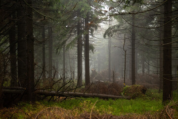 Bajkowa sceneria w lesie skąpanym w gęstej mgle