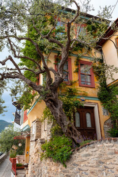 Big tree and old houses in narrow streets of Kavala, Greece