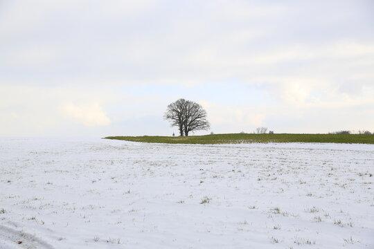 Der Baum im Winter - Winterlandschaft